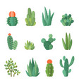cartoon cactus and succulents set vector image vector image