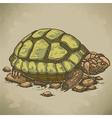 engraving turtle retro vector image vector image