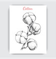 hand drawn postcard with cotton vector image