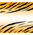 tigerskinbackground vector image vector image