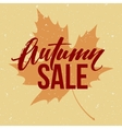 Autumn seasonal sale banner design Fall leaf vector image