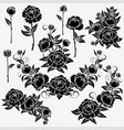 collection roses vector image vector image