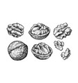 nuts set hand drawn sketch walnuts isolated on vector image vector image