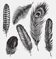 set hand drawn feathers vector image