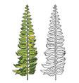 tropical leaf botanical hand drawn vector image vector image
