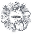 frame with hand drawn farm vegetables vector image