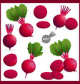 set fresh beet or red beetroot vegetable with vector image