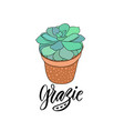 succulent in the pot with text - grazie thank you vector image vector image