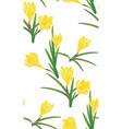 yellow crocus flowers vector image vector image