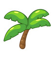 coconut palm tree isolated vector image