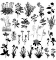 flowers and plants silhouette vector image vector image