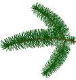 fur-tree branch vector image vector image