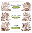 herbs and spices organic plant sketch banner set vector image vector image