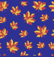 pattern with b bright maple leaves vector image vector image