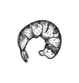 shrimp tail hand drawn isolated icon vector image vector image