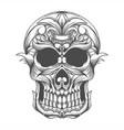 skull head vector image