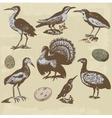 Vintage birds set vector image