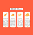 bone cells type a scheme vector image vector image