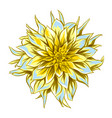 fluffy yellow dahlia vector image vector image