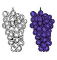grape on white background for package poster sign vector image