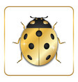 ladybug gold insect small icon golden metal lady vector image