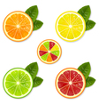 Citrus Fruit Set vector image vector image
