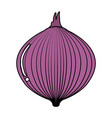 onion fresh isolated icon vector image vector image