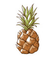 pineapple decor icon healthy tropical tasty fruit vector image