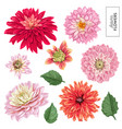 red asters flowers set tropical floral elements vector image vector image