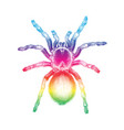 tarantula spider hand drawing vintage engraving vector image vector image