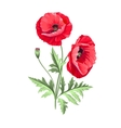 Background with poppies vector image vector image