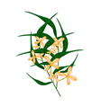 Orange Sweet Osmanthus Flower and Green Leaves vector image