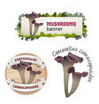 set of mushroom banner badge sticker vector image vector image