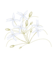 Beautiful White Indian Cork Flowers on White vector image vector image