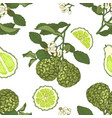 colorful seamless pattern with bergamot vector image vector image