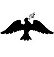 dove with branch silhouette vector image vector image