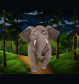 gray elephant walking in the forest at night vector image