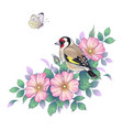 hand drawn goldfinch sitting on dog-rose branch vector image vector image