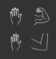 human body parts chalk icons set vector image