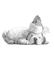 Puppy bulldogs 08 vector image vector image