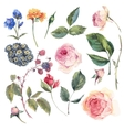 Set vintage elements of English roses vector image