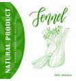 vegetable food banner fennel sketch organic food vector image vector image