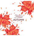 hello autumn watercolor floral design maple leaf vector image vector image