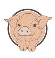piglet symbol of the year cute pig with legs vector image vector image