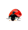 set of hand drawn ladybugs ladybirds vector image