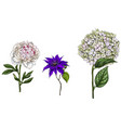 set with peony clematis and phlox flowers leaves vector image vector image