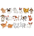 different breeds dogs vector image