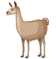 Llama with happy face vector image vector image