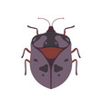 bug beetle insect species top view vector image vector image