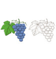 grapes hand drawn sketch vector image